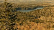 "J.D. Irving Ltd. has designated the estimated 500 hectares of old-growth forest it owns around Ayers Lake as ""unique."""