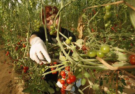 Israel resuming some Gaza produce imports halted in 2007