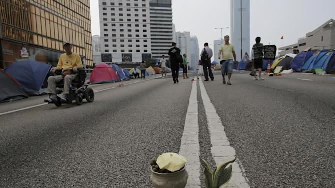 A Sansevieria trifasciata is planted by pro-democracy protesters on a main road in an occupied area outside government headquarters in Hong Kong's Admiralty district Wednesday, Oct. 22, 2014. The student-led protests are rooted in growing discontent among young people about poor economic prospects amid one of the world's biggest wealth gaps. The protesters want Hong Kong's government to abandon a requirement by China's legislature for a committee to screen candidates for inaugural 2017 elections for the top leader. They say it gives the city's pro-Beijing elite too much say. (AP Photo/Vincent Yu)