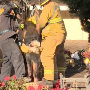 Firefighters use soap to free woman from chimney