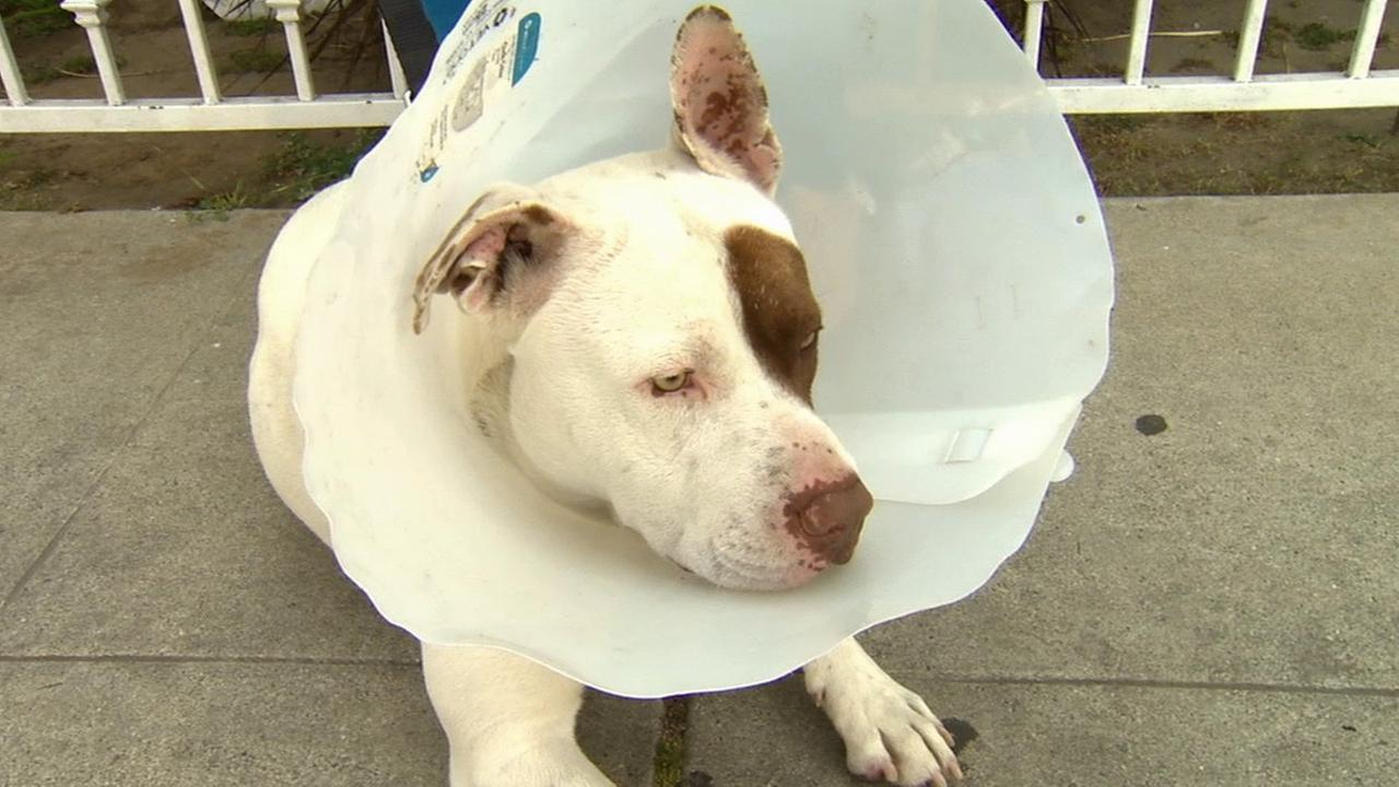 Evicted Long Beach homeowners leave dog behind