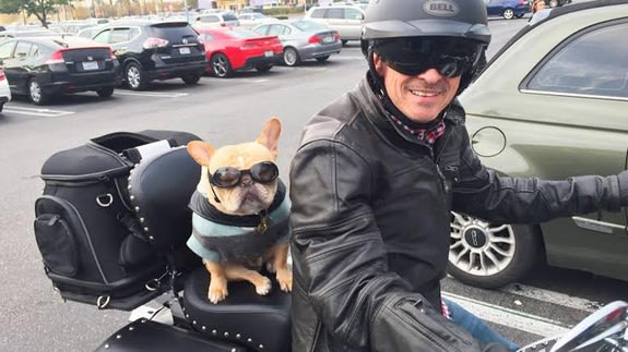 This motorcycle-riding French bulldog is guaranteed to make you smile