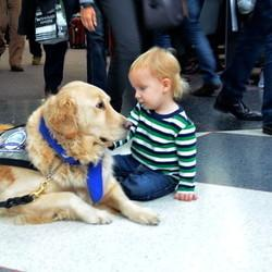 Cuddly Comfort Dogs At Airport Help Passengers De-Stress During Ruff Holiday Travels