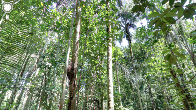 Take a virtual vacation with Google Street View in the Amazon rain forest and Thailand
