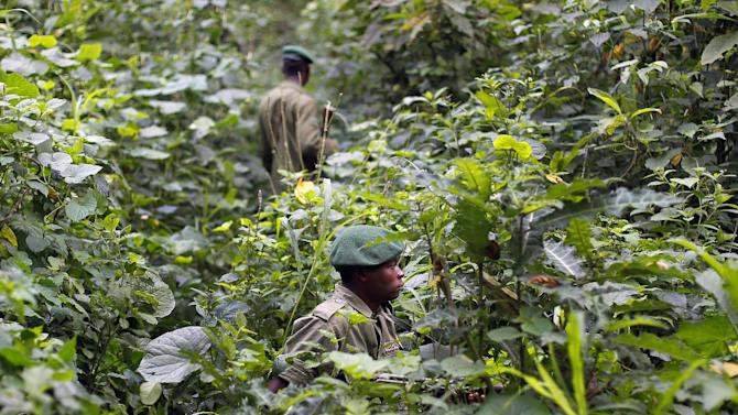 In this picture taken Thursday  Aug. 12,  2012,   Park rangers patrol  in the Virunga National Park near Rumangabo, some 60 kms (40 miles) north of Goma, eastern Congo. Vistually every rebellion that has confronted Congo in the past 30 years has started in Virunga, Africa's oldest national park created under Belgian rule in 1925.Virunga Park has been confronted with problems including Congo's weak government, the chronic instability of the Central African region, including its history of genocide, and the need of the population surrounding the park for economic subsistence.But now Virunga faces a threat that conservationists fear could be one battle too many for the park: oil exploration.(AP Photo/Jerome Delay)