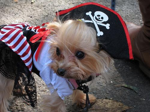Pirate Puppy!