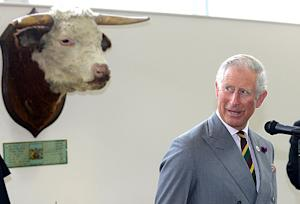 Prince Charles Visits Meat Inspection Plant as Kate Middleton Gives Birth to Prince: Funny Pictures