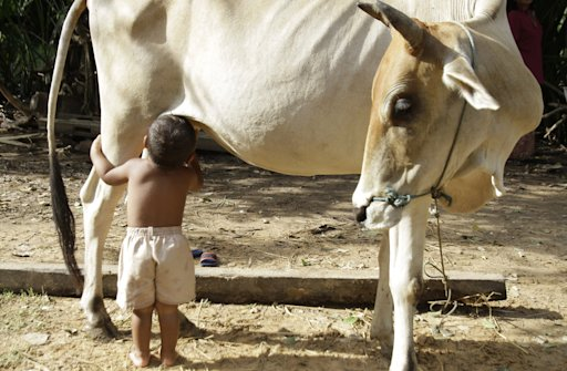 A Cambodian man says his young grandson has lived partly on milk he suckles directly from a cow since the boy's parents left their rural village in search of work.