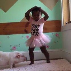 Little Girl Dances To Taylor Swift With Her Pet Pig And All Is Right With The World