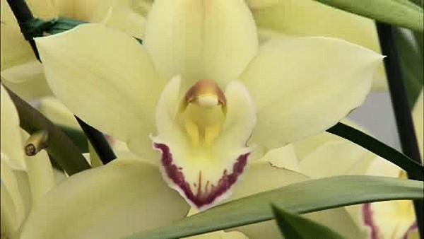 The International Orchid Show and sale