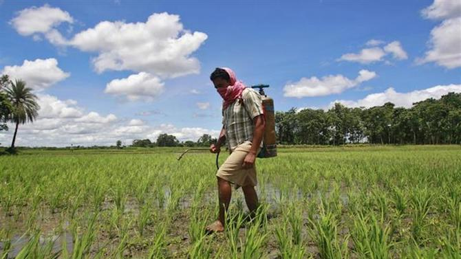 A farmer sprays pesticide containing monocrotophos on a paddy field at Mohanpur village, about 45 km west of Agartala, capital of Tripura July 25, 2013. REUTERS/Jayanta Dey/Files
