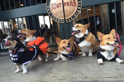 Wave of adorable dogs invades San Francisco Giants game