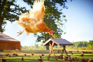 the happy egg co. Free Range Eggs Now Available in Southern Californian Gelson's Grocery Stores