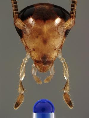 Yikes! Cockroaches Evolved to Avoid Sugary Baits