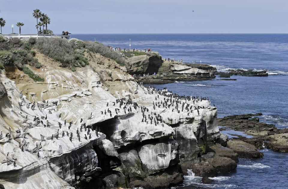 Tourist watch the massive bird gathering on the cliffs in the La Jolla section of San Diego, Tuesday, April 2, 2013.  The birds have turned the cliffs white with their droppings and caused a stench in the area that draws tourist to restaurants and hotels.  (APPhoto/Lenny Ignelzi)