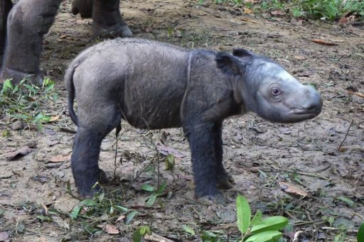 &quot;Andatu&quot; was born at an Indonesian sanctuary, on the southern tip of Sumatra island