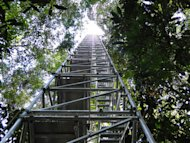 Scientific measurement tower in the rainforest at the ATTO site (March 2012).