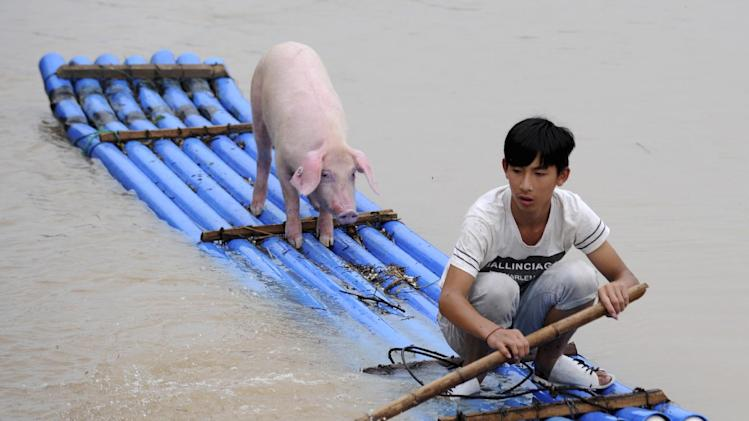 A Chinese man rows a makeshift raft to evacuate a pig from a flooded village in Lishui in east China's Zhejiang province Wednesday Aug. 20, 2014. (AP Photo) CHINA OUT