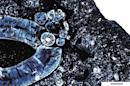 Handout of a histological thin section of the gorgonopsid lower jaw of a saber-tooth mammal-like beast that prowled Tanzania 255 million years ago