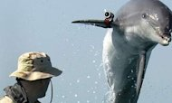 Mine-Seeking Dolphins Replaced By Robots