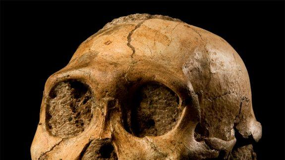 Humanity May Have Originated in the Woods