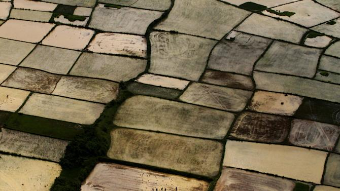 This aerial view shows Indian farmers replanting paddy saplings at a rice field after monsoon rains on the outskirts of Bhubaneswar, India, Wednesday, Aug. 6, 2014. The annual monsoon season, which runs from June through September, is vital for the largely agrarian economies of South Asia. (AP Photo/Biswaranjan Rout)