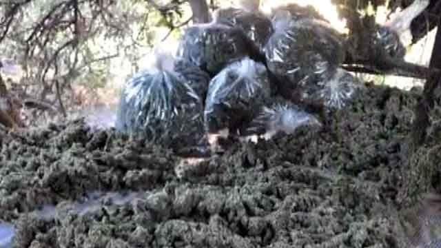 DEA raids eight marijuana farms in California