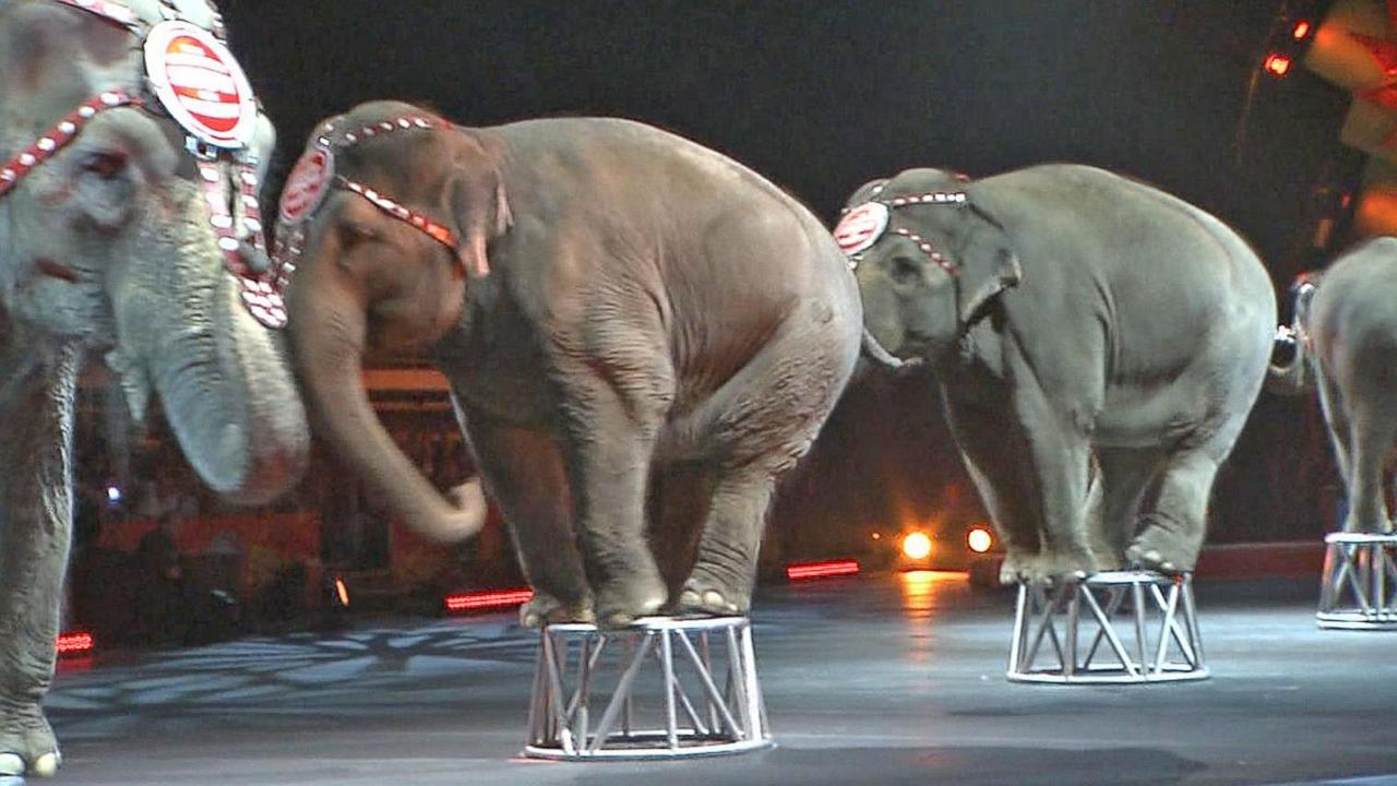 Elephants perform for final time at Ringling Bros.