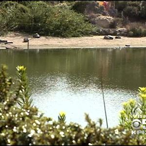 Chemicals Being Used To Kill Invasive Fish In San Francisco Presidio Lake