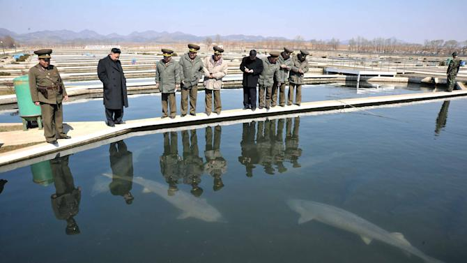 In this undated photo released by the Korean Central News Agency (KCNA) and distributed March 12, 2013 by the Korea News Service, North Korean leader Kim Jong Un, second left, watches sturgeons in a pond at the Ryongjong Fish Farm in South Hwanghae, southwestern North Korea. (AP Photo/KCNA via KNS) JAPAN OUT UNTIL 14 DAYS AFTER THE DAY OF TRANSMISSION