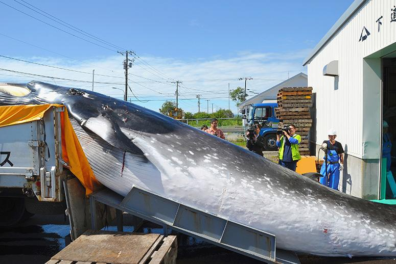 Japan to Resume Controversial Whaling Program