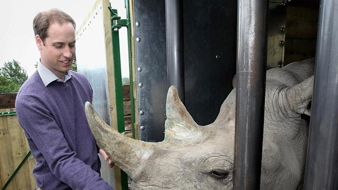 "In this Wednesday June 6, 2012 photo Britain's Prince William, the Duke of Cambridge, feeds a 5-year-old black rhino called Zawadi as he visits Port Lympne Wild Animal Park in Port Lympne, southern England . The Duke of Cambridge has called people involved in the illegal trade of rhino horn ""extremely ignorant, selfish and utterly wrong"". Black rhinos are critically endangered in the wild because of the soaring price of rhino horn, which is worth more than gold due to demand in some countries.   (AP Photo/Chris Jackson/Pool)"