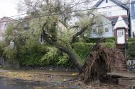 FILE - In this Oct. 31, 2012 file photo, a tree in Jersey City, N.J., lies tangled in power lines after being brought down by high winds from Superstorm Sandy. Experts say the winds of Superstorm Sandy took out more trees in the neighborhoods, parks and forests of New York and New Jersey than any previous storm on record. (AP Photo/Charles Sykes, File)