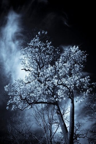 A tree illuminated by the glow of the moon. (Photo: innerdemon/environmentalgraffiti.com)