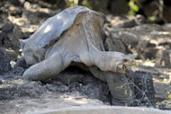 Lonesome George, the last known Pinta Island Tortoise, has died, leaving the world one species poorer. Estimated to be more than 100 years old, the creature&#39;s cause of death remains unclear and a necropsy is planned