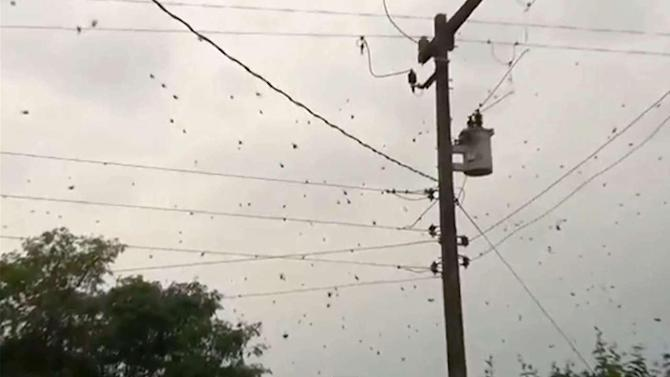 'Spider rain' caught on tape in Brazil