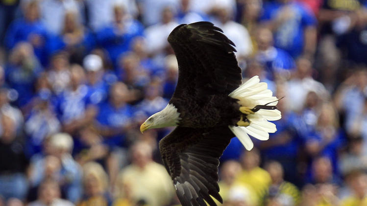 A bald eagle flies into Michigan Stadium during the national anthem before an NCAA college football game between Air Force and Michigan at Michigan Stadium in Ann Arbor, Mich., Saturday, Sept. 8, 2012. (AP Photo/Carlos Osorio)