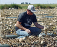 Owner Eric Jensen examines cantaloupe on the Jensen Farms near Holly, Colo., on Wednesday, Sept. 28, 2011. The Food and Drug Administration has recalled 300,000 cases of cantaloupe grown on the Jensen Farms after connecting it with a listeria outbreak. Officials said Wednesday more illnesses and possibly more deaths may be linked to the outbreak of listeria in coming weeks. (AP Photo/Ed Andrieski)