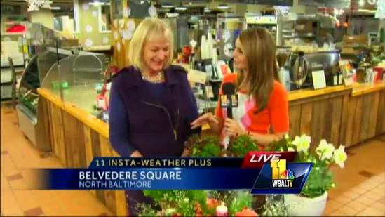 Ava visits Belvedere Square for holidays