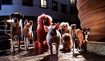 Babe meets up with a gaggle of canines in Babe: Pig In The City