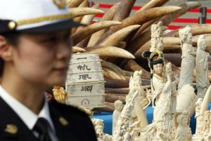 Police officer stands guard next to ivory and ivory…