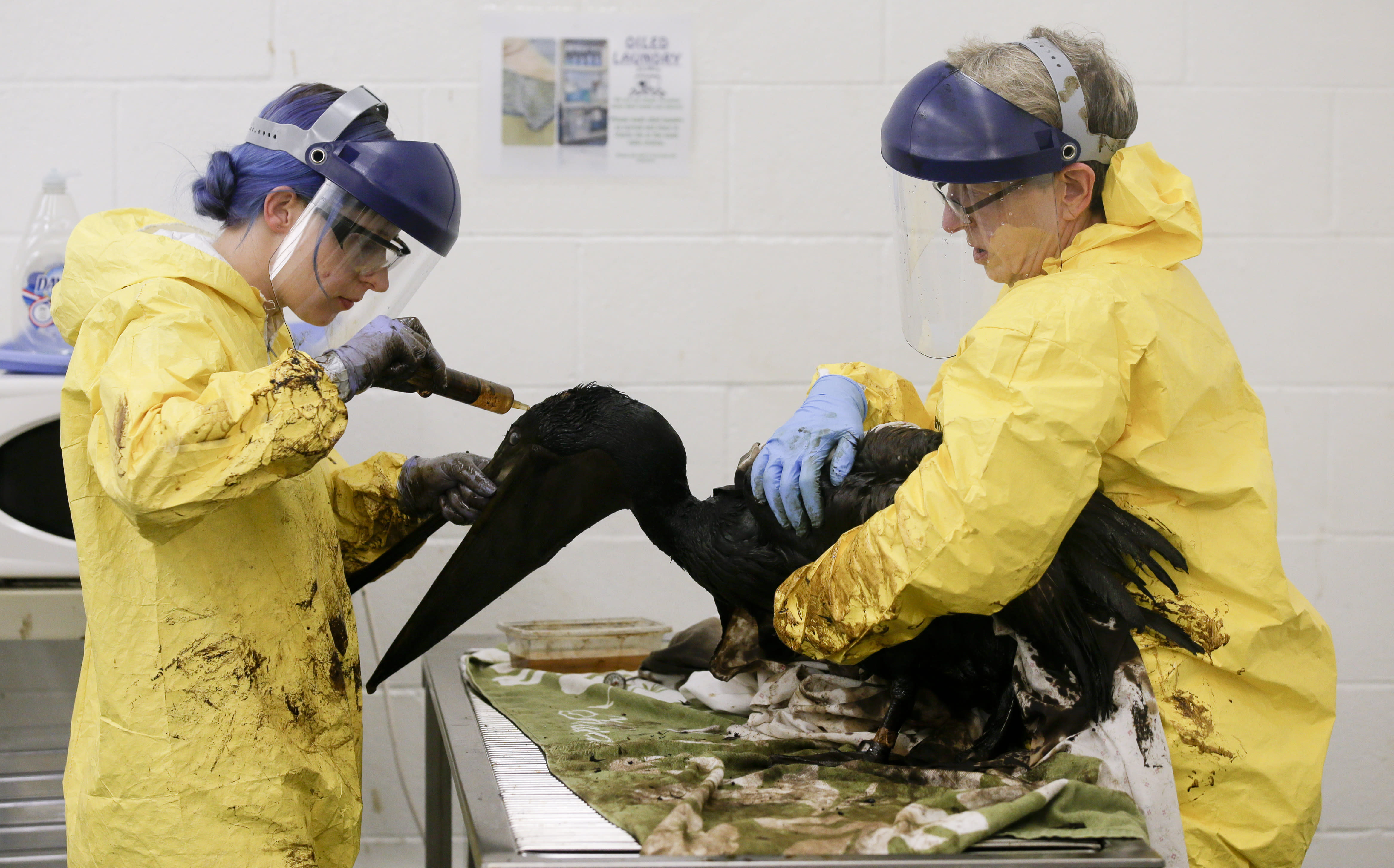 Choppy slick is harder to clean up; more oily animals found