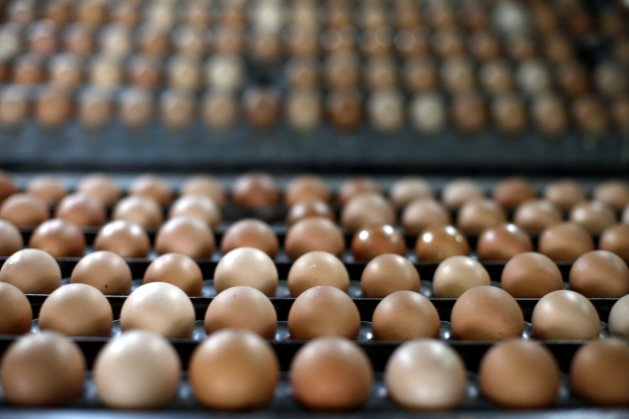 ever put eggs in the fridge: A dozen food myths th