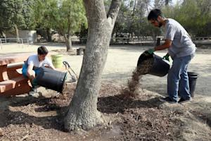 TreePeople volunteers Josh Landau, left, and Dante …