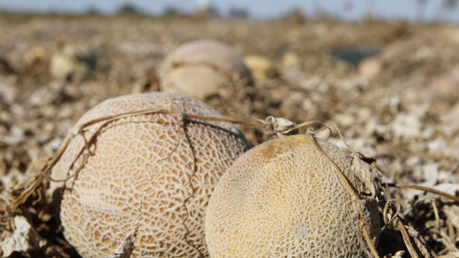 Cantaloupes rot in the afternoon heat on a field on the Jensen Farms near Holly, Colo., on Wednesday, Sept. 28, 2011. The Food and Drug Administration has recalled 300,000 cases of cantaloupe grown on the Jensen Farms after connecting it with a listeria outbreak. Officials said Wednesday more illnesses and possibly more deaths may be linked to the outbreak of listeria in coming weeks.  (AP Photo/Ed Andrieski)