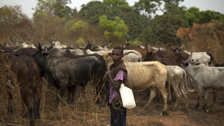 An ethnic Muslim Peul stands with his cattle near the town of Bouar