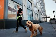 The Spot Experience provides pet services to 30 residential buildings in Manhattan.