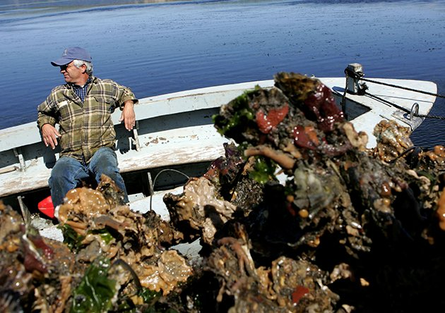 Fight to close oyster farm pits environmentalists against foodies