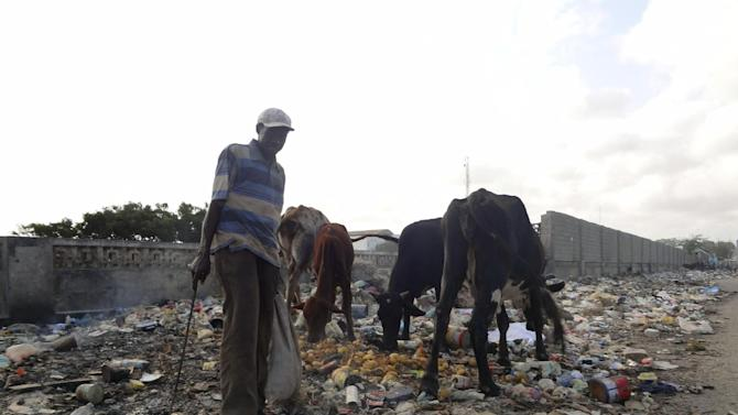 A southern Somali man  lets his remaining cattle forage on a trash dump in Mogadishu, Somalia, after the drought claimed most of them , Saturday Aug. 20, 2011, Thousands of people have arrived in Mogadishu over the past two weeks seeking assistance and the number is increasing by the day, due to lack of water and food.  (AP Photo/Abdi Hussein).