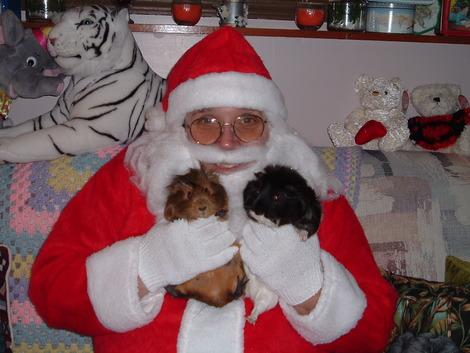 First Person: Santa, Dad and My Guinea Pigs